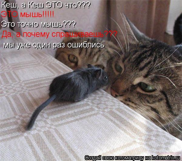 Котоматрица: Кеш, а Кеш ЭТО что??? ЭТО мышь!!!!! Это точно мышь??? Да, а почему спрашиваешь??? мы уже один раз ошиблись