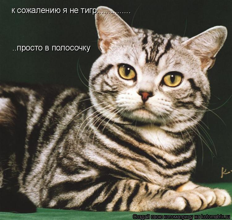 Котоматрица: к сожалению я не тигр............... ..просто в полосочку
