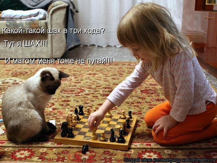 Котоматрица: Какой-такой шах в три хода? Тут я ШАХ!!! И матом меня тоже не пугай!!!