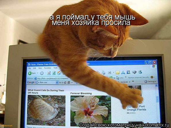 Котоматрица: а я поймал у тебя мышь меня хозяйка просила
