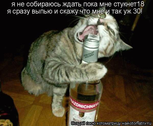 Котоматрица: я не собираюсь ждать пока мне стукнет18 я сразу выпью и скажу что мне и так уж 30!