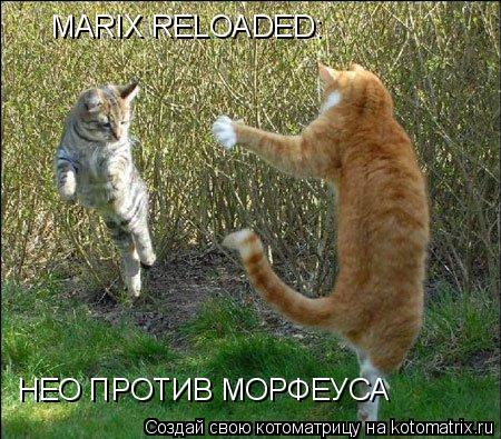 Котоматрица: MARIX RELOADED:НЕО ПРОТИВ МОРФЕУСА MARIX RELOADED:НЕО ПРОТИВ МОРФЕУСА MARIX RELOADED: НЕО ПРОТИВ МОРФЕУСА