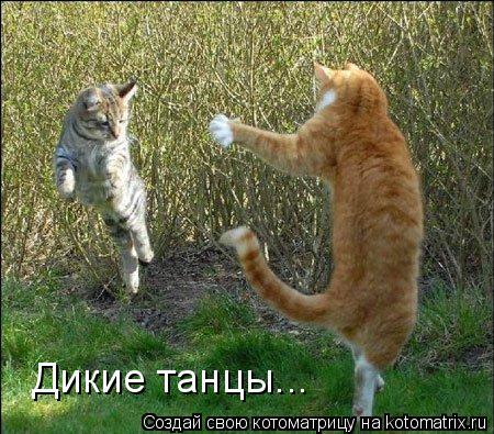 Котоматрица: Дикие танцы...