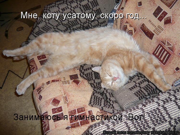 Котоматрица: Мне, коту усатому, скоро год. Мне, коту усатому, скоро год... Занимаюсь я гимнастикой. Вот!