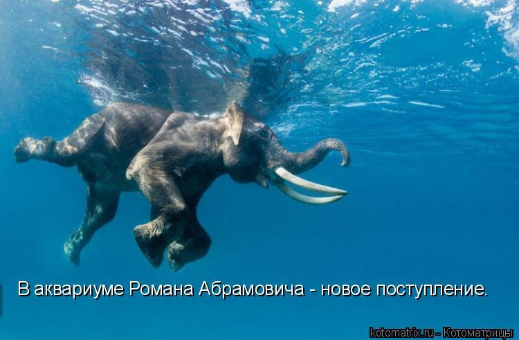 Котоматрица: В аквариуме Романа Абрамовича - новое поступление.