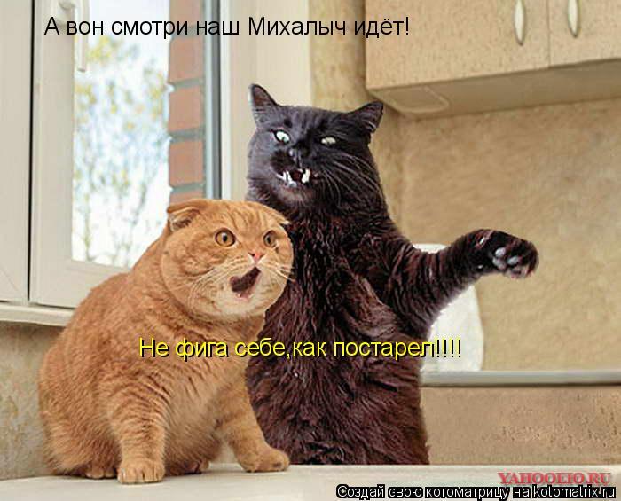 Котоматрица: А вон смотри наш Михалыч идёт! Не фига себе,как постарел!!!!