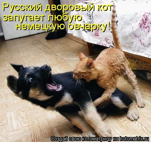 Котоматрица - Русский дворовый кот запугает любую немецкую овчарку!