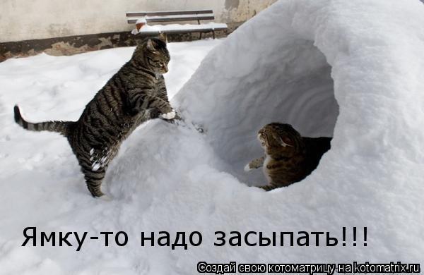 Котоматрица: Ямку-то надо засыпать!!!