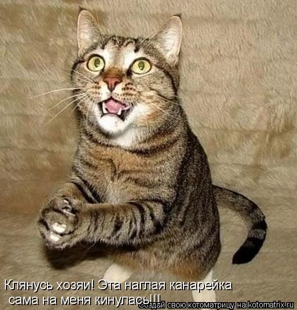 Котоматрица: Клянусь хозяи! Эта наглая канарейка сама на меня кинулась!!!