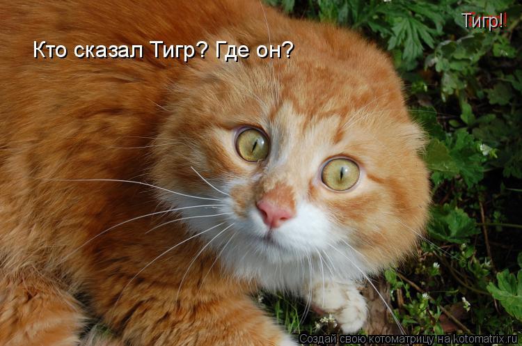Котоматрица: Тигр!   Кто сказал Тигр? Где он?  Тигр!