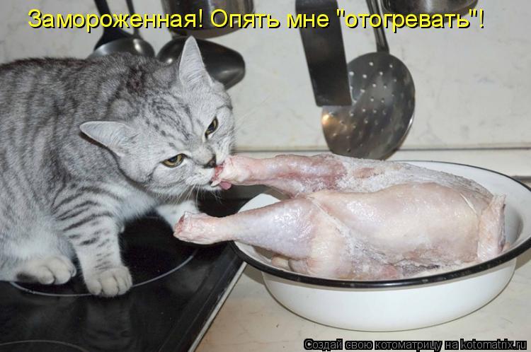 """Котоматрица - Замороженная! Опять мне """"отогревать""""!"""