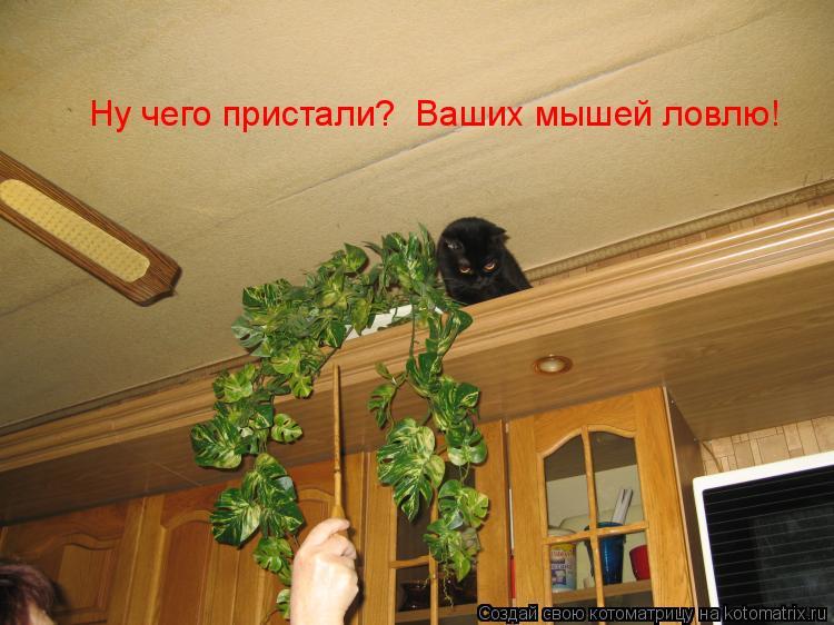 Котоматрица: Ну чего пристали?  Ваших мышей ловлю!