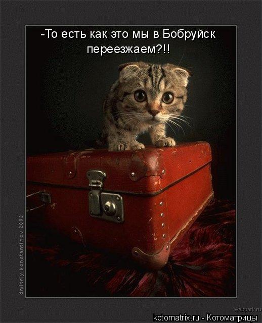 Котоматрица: -То есть как это мы в Бобруйск  переезжаем?!!