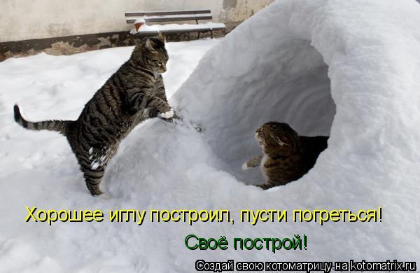 Котоматрица: Хорошее иглу построил, пусти погреться! Своё построй!