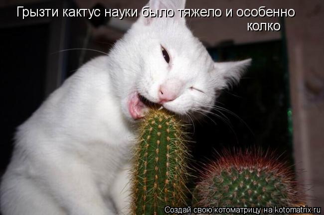 Котоматрица: Грызти кактус науки было тяжело и особенно колко