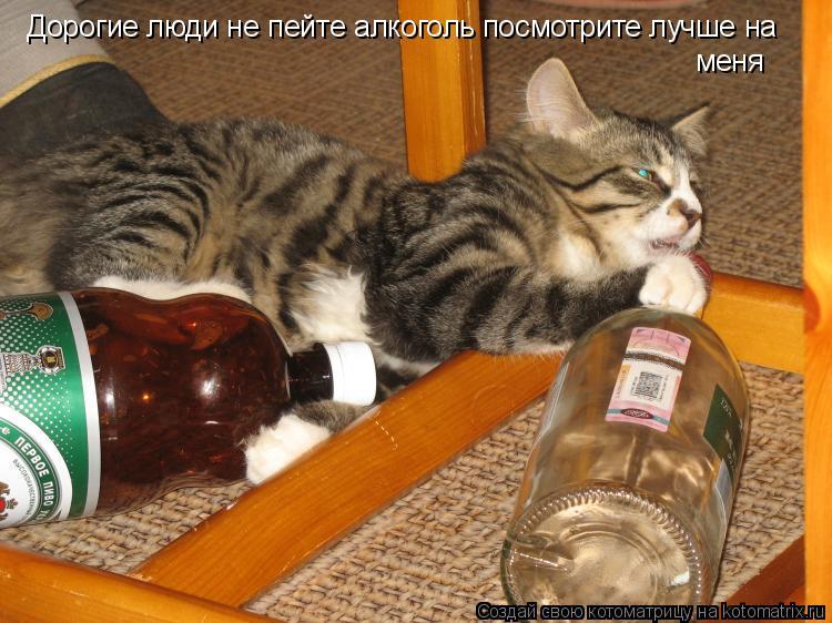 Котоматрица: Дорогие люди не пейте алкоголь посмотрите лучше на  меня