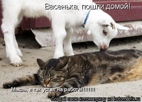 Котоматрица: Васенька, пошли домой! Васенька, пошли домой! Мышь, я так устал на работе!!!!!!!!