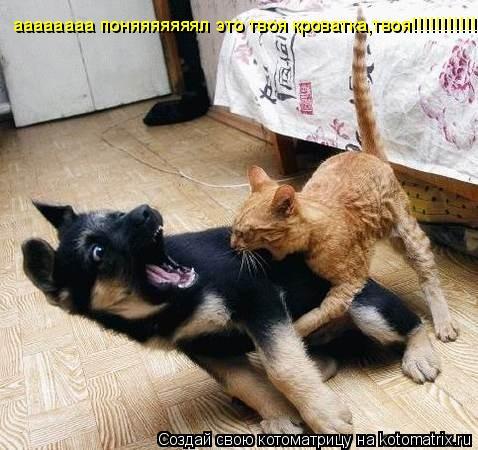 Котоматрица: аааааааа поняяяяяяял это твоя кроватка,твоя!!!!!!!!!!!