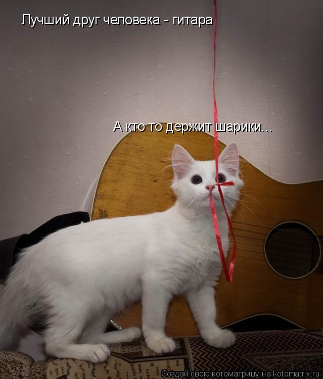 Котоматрица: Лучший друг человека - гитара А кто то держит шарики...