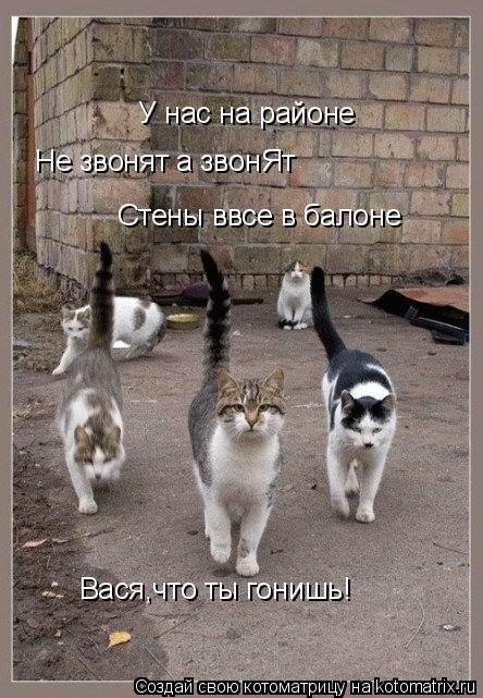 Котоматрица: У нас на районе Не звонят а звонЯт Стены ввсе в балоне Вася,что ты гонишь!