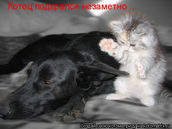 Котоматрица: Котец подкрался незаметно ...
