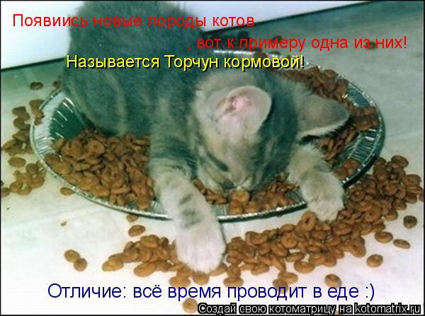 Котоматрица: Появиись новые породы котов , вот к примеру одна из них! Называется Торчун кормовой! Отличие: всё время проводит в еде :)