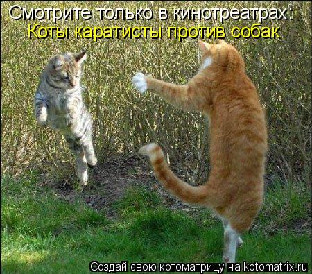 Котоматрица: Смотрите только в кинотреатрах: Коты каратисты против собак