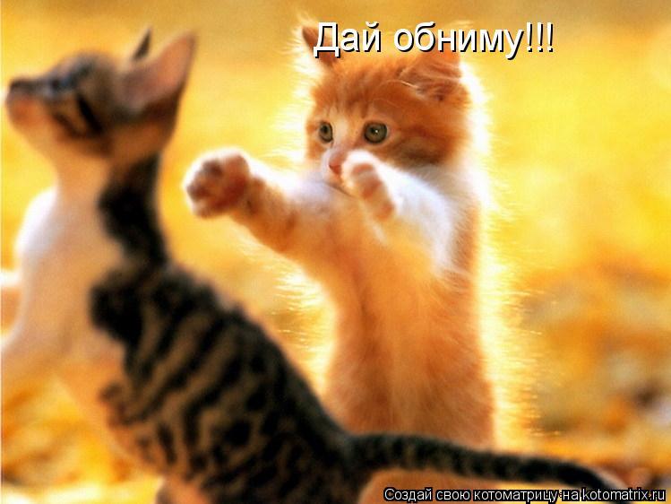 Котоматрица: Дай обниму!!!