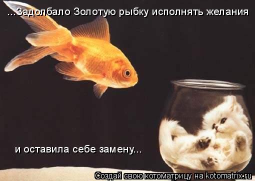 Котоматрица: ...Задолбало Золотую рыбку исполнять желания и оставила себе замену...