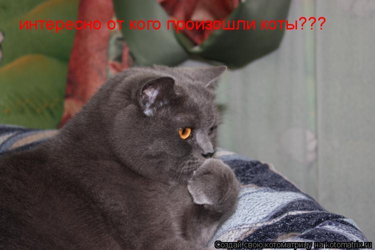 Котоматрица: интересно от кого произошли коты???