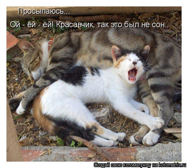 Котоматрица: Просыпаюсь... Ой - ёй - ёй! Красавчик, так это был не сон...