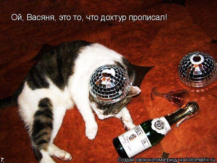 Котоматрица: Ой, Васяня, это то, что дохтур прописал!