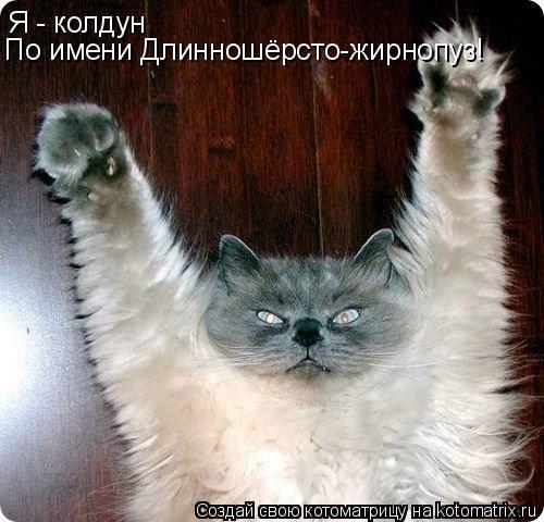 Котоматрица: Я - колдун По имени Длинношёрсто-жирнопуз!