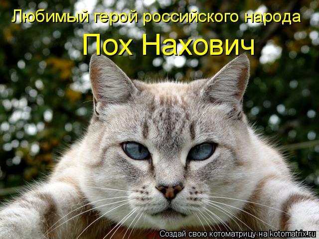 Котоматрица: Любимый герой российского народа Пох Нахович