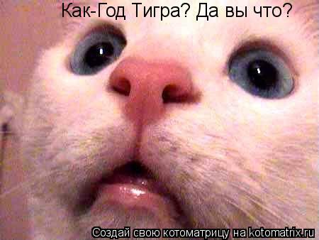 Котоматрица: Как-Год Тигра? Да вы что?