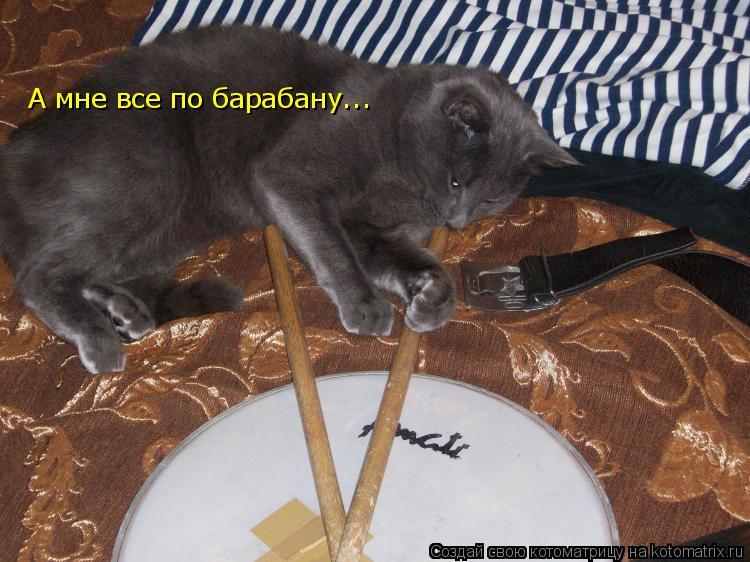 Котоматрица: А мне все по барабану...