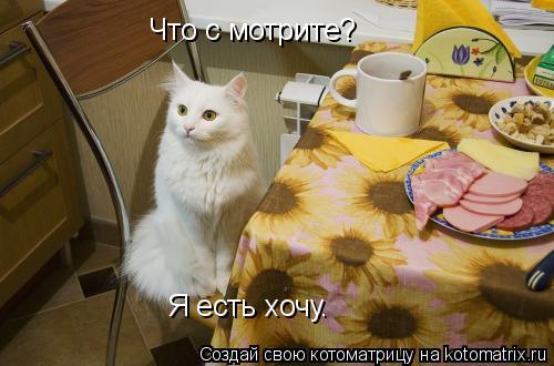 Котоматрица: Что с мотрите? Я есть хочу.