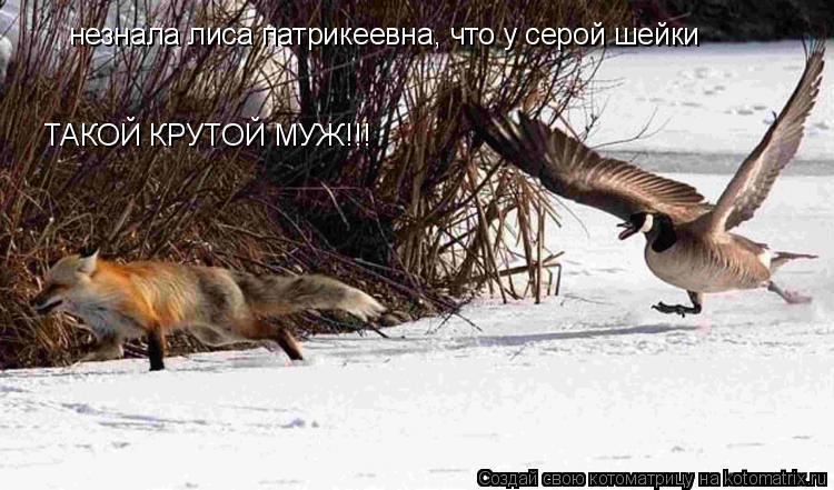 Котоматрица: незнала лиса патрикеевна, что у серой шейки ТАКОЙ КРУТОЙ МУЖ!!!
