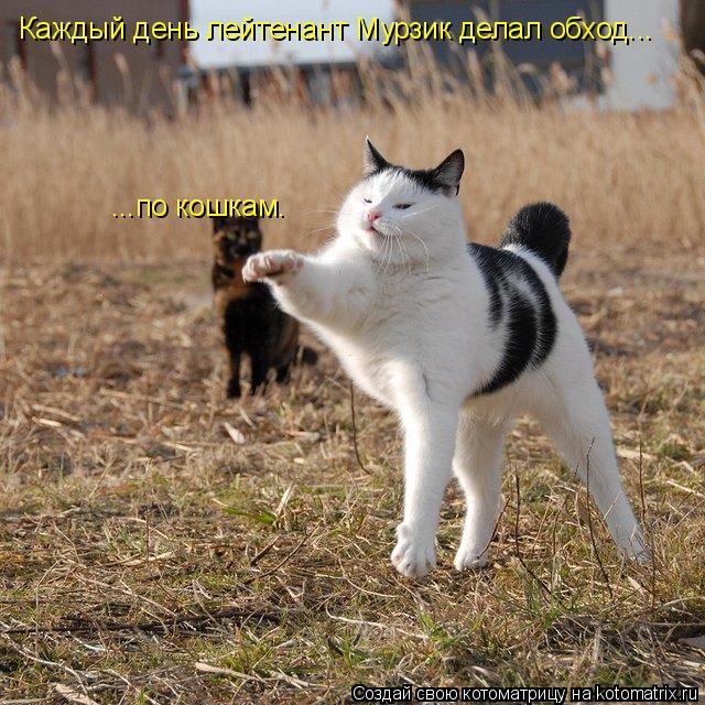 Котоматрица: Каждый день лейтенант Мурзик делал обход... ...по кошкам.