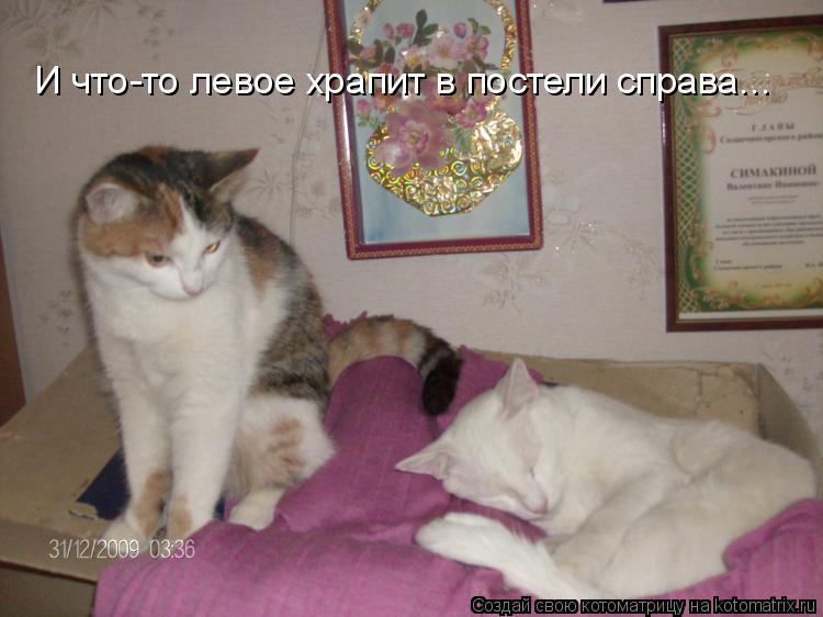 Котоматрица: И что-то левое храпит в постели справа...