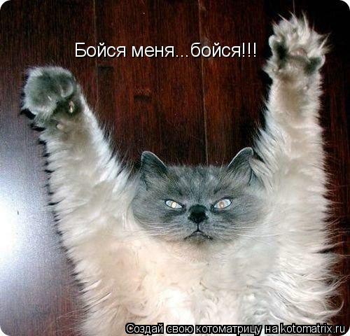 Котоматрица: Бойся меня...бойся!!!