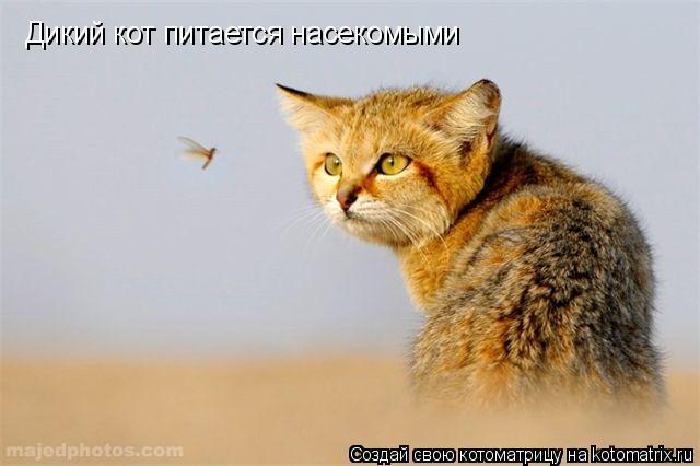 Котоматрица: Дикий кот питается насекомыми