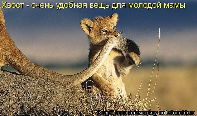 Котоматрица: Хвост - очень удобная вещь для молодой мамы