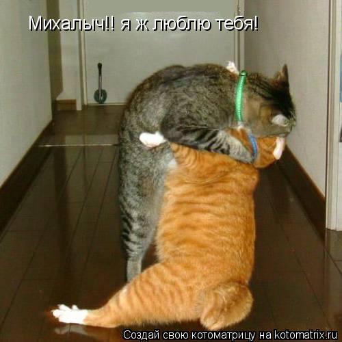 Котоматрица: Михалыч!! я ж люблю тебя!