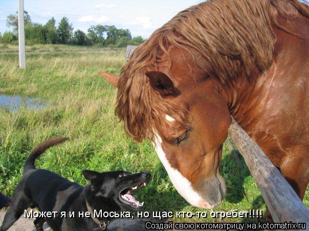 Котоматрица: Может я и не Моська, но щас кто-то огребет!!!!