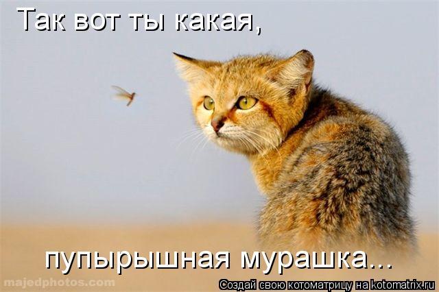 Котоматрица: Так вот ты какая,  пупырышная мурашка...