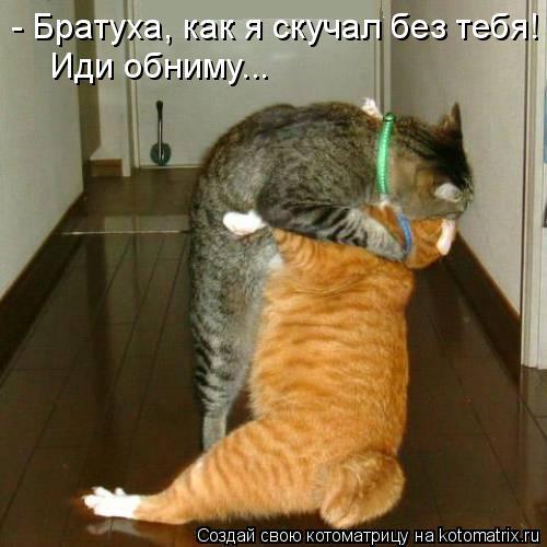 Котоматрица: Иди обниму... - Братуха, как я скучал без тебя!