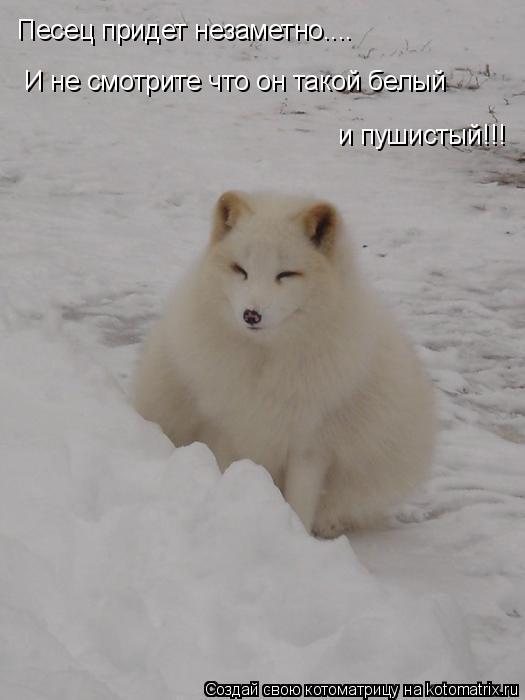 Котоматрица: Песец придет незаметно.... И не смотрите что он такой белый  и пушистый!!!