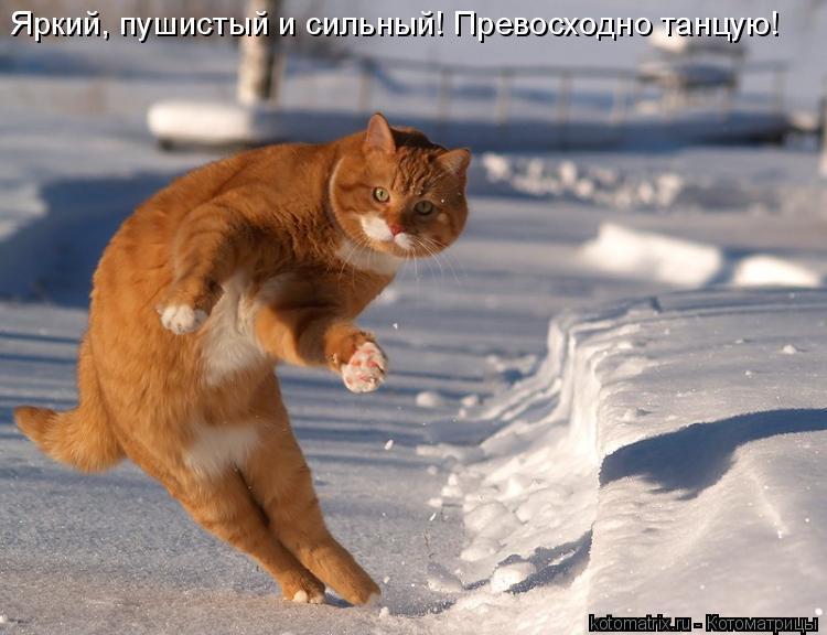 Котоматрица: Яркий, пушистый и уверенный! Превосходно танцую! Яркий, пушистый и сильный! Превосходно танцую!
