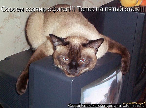 Котоматрица: Совсем хозяин офигел!!! Телек на пятый этаж!!!